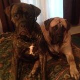 Winston & Maxwell