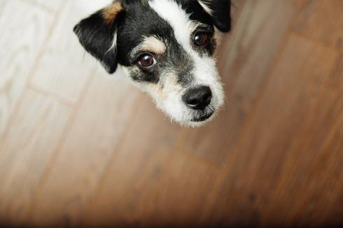 dog-926725_640