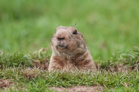 groundhog-100624996-primary.idge