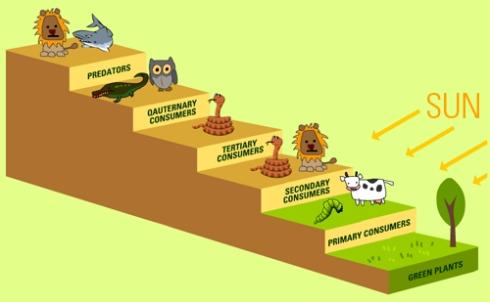 food-chain-levels