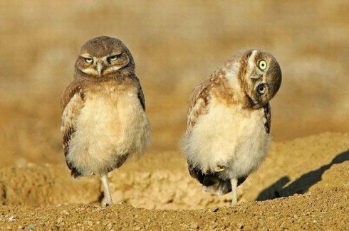 funny-pairs-of-animals-388-8