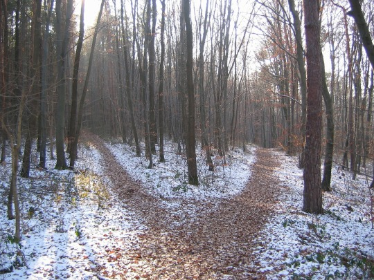 forest-path-238887_1280