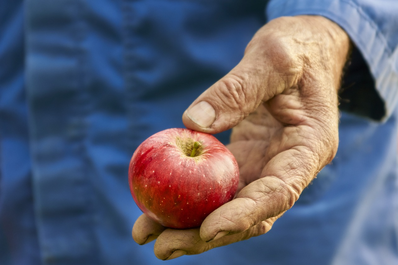 harvest-2733443_1280