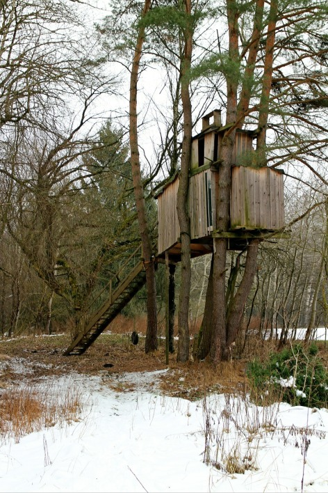 treehouse-255518_1280