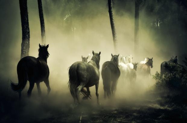 horses-1759214_1280